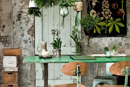 planten-in-huis