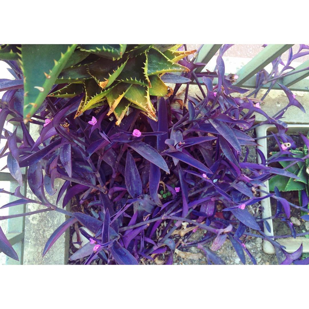 Jadore ces plantes grasses ! menton plantesgrasses colors