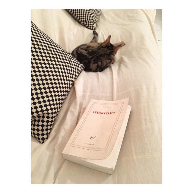 Soire avec mon chat et un bon livre offert parhellip