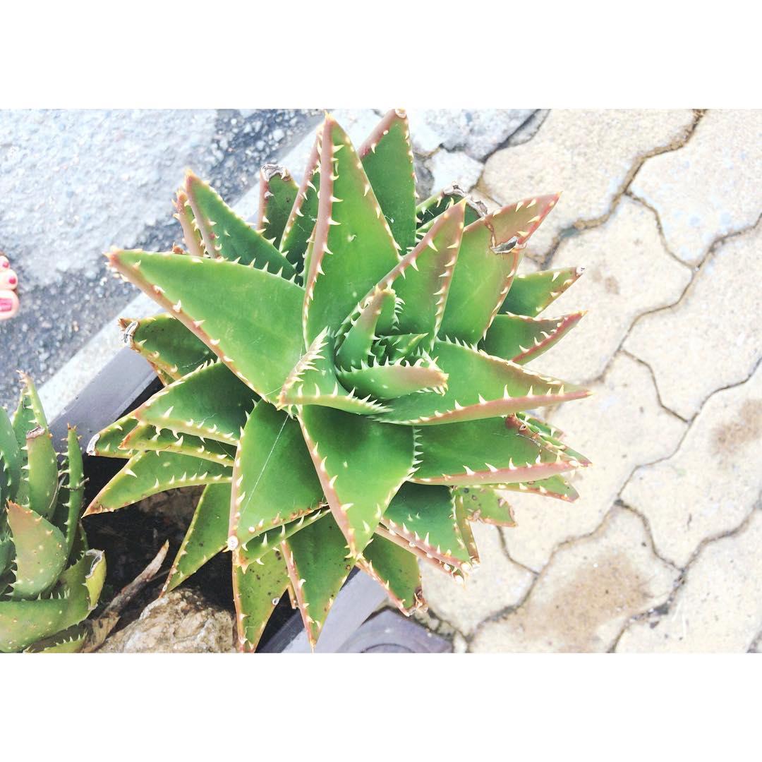 cactuslover summer