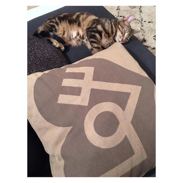 cat alexandergirard love