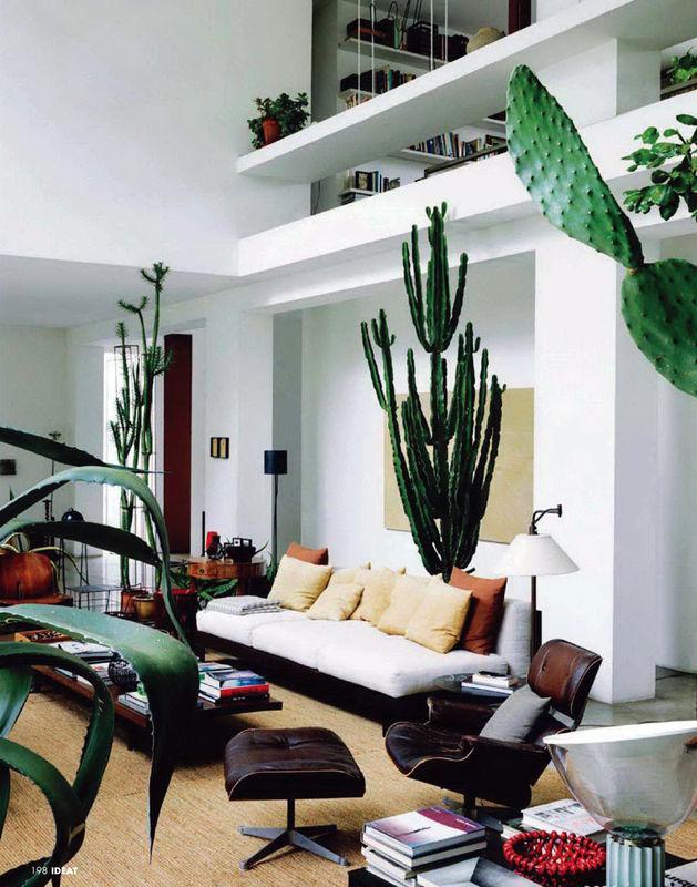 cactus-living