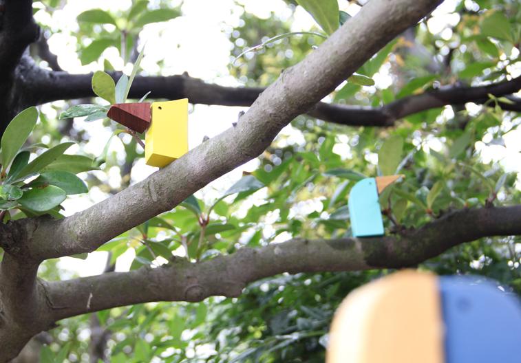 bird-call-b6-studio-toy